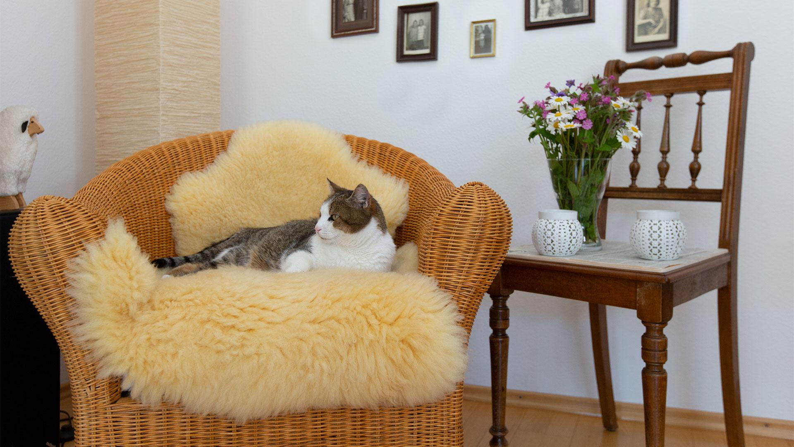 Katzen-Schaffelle